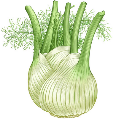 cultured fennel
