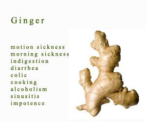 ginger-front
